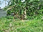 Maharagama land for Sale