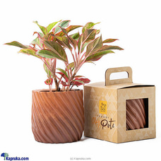 Pochchi Indoor Clay Pot Medium By Pochchi at Kapruka Online for specialGifts
