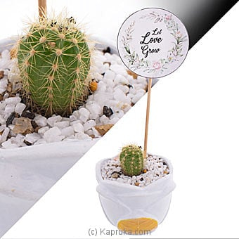 Let Love Grow Cactus Plant Online at Kapruka | Product# flowers00T1191