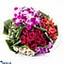 Shop in Sri Lanka for Unforgettable You Flower Bouquet