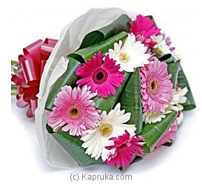 Gerbera Festival at Kapruka Online for intgift