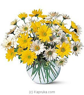 Dashing Daisies at Kapruka Online for intgift
