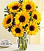 Sunflower Radiance at Kapruka Online for intgift