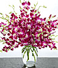 Purple Dendrobium Orchids at Kapruka Online for intgift
