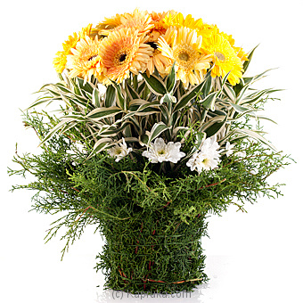 Shower Of Kisses at Kapruka Online for flowers