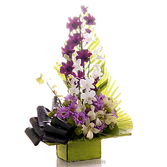 Orchid Lavishness at Kapruka Online for flowers
