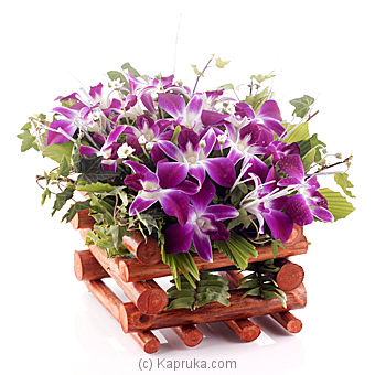 Orchid Fiesta Online at Kapruka | Product# flowers00T471