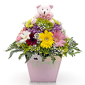 Pink Pot Of Perfect Teddy Hugs Online at Kapruka | Product# flowers00T531