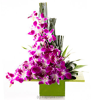 Orchids Forever Online at Kapruka | Product# flowers00T597
