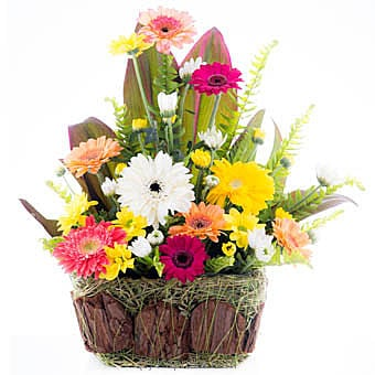 Rainbow Kisses Online at Kapruka | Product# flowers00T650