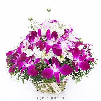 Sympathy Orchid In Basket Online at Kapruka | Product# flowers00T860