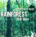 Rainforest at Kapruka Online for music
