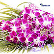 Kapruka Online Shopping Product Orchids Wrap