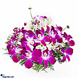 Kapruka Online Shopping Product Sympathy Orchid In Basket