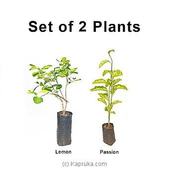 Lemon And Passion Bud Plant Set Online at Kapruka | Product# grocery00996